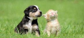 Cuccioli e vaping